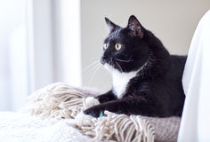 Black and white cat lying on plaid at home Royalty Free Stock Photography