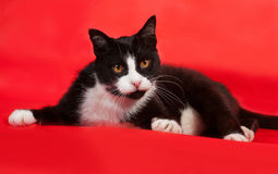 Black and white cat lying on red Royalty Free Stock Photo