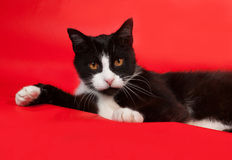 Black and white cat lying on red Royalty Free Stock Image