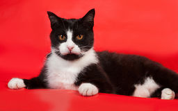 Black and white cat lying on red Stock Images