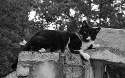 Black or white cat. Black and white cat lying on the roof of the building stock image
