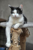 Black and white cat lying Royalty Free Stock Photos
