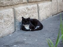 Black cat is lying on the street. Black with white cat is lying on the street stock photo