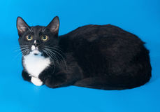 Black and white cat lying teenager on blue Stock Photo
