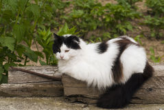 Black and white cat. Lying on a tree royalty free stock image