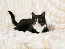 Black and white cat lying on white Stock Image