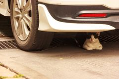 Black and white cat napping on floor under a car in daytime.  Stock Image