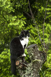 Black and white cat. On nature background royalty free stock photography