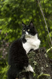 Black and white cat. On nature background royalty free stock images
