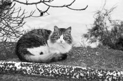 Black and white cat in the nature Stock Photo