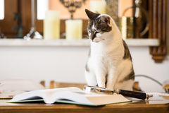 Black and white cat next to a book. Magnifier, loupe Royalty Free Stock Photo