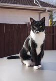 Black and white cat outdoors Stock Image