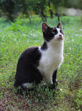 Black and white cat in park, staring up Royalty Free Stock Images