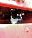 Black and white cat peers out of an opening from a piece farm equipment. This country cat loves exploring, during hay season a new piece of equipment was brought Stock Photos