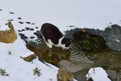 Cat on thin ice Stock Images