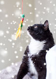 Black and white cat playing with feather toy Royalty Free Stock Images