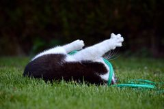 Black and white cat playing in the garden Royalty Free Stock Photography