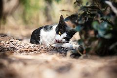 Black and white cat playing on the ground. In the garden stock photos