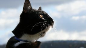 Black and white cat. stock images