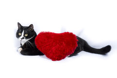 Black and white cat with a red heart pillow Stock Photo