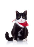 Black and white cat with red scarf Stock Photos