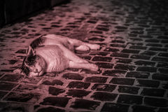 Black and white cat relaxing on cobbled floor Royalty Free Stock Photos