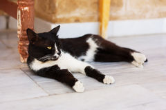 Black and white cat. Relaxing outdoor stock photography