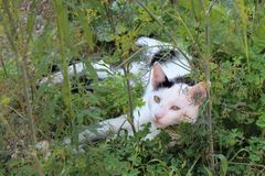 Black and white cat. Resting in tall grass Stock Photo