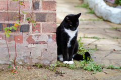 Black and white cat sat in garden Royalty Free Stock Image