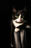 Black and white cat with serious look and green eyes lies on a chair. concept about pets and animals Stock Images