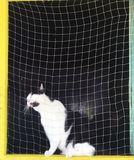 A black and white cat sits at the window behind the net, meowing loudly and asks him to let him go outside. stock photography