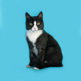 Black and white cat sitting on blue Royalty Free Stock Image