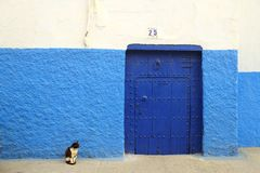 A black and white cat sitting by the blue door with blue and white wall. stock photos