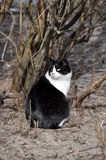 Black and white cat sitting. In front of a bush Royalty Free Stock Image