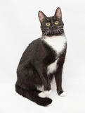 Black and white cat sitting, gazing thoughtfully Royalty Free Stock Photos