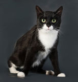 Black and white cat sitting on gray. Background Royalty Free Stock Images