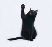 Black and white cat sitting on gray Stock Photography