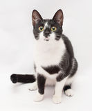 Black and white cat sitting and looking frightened into the dist Stock Photos