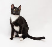 Black and white cat sitting, looking up Royalty Free Stock Photography