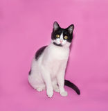 Black and white cat sitting on pink Stock Photography