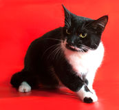 Black and white cat sitting on red Stock Images