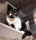 Black and white cat sitting on shelf Stock Photo