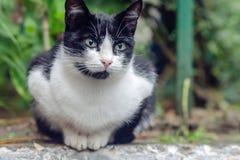 кот черный и белый Stock Photo