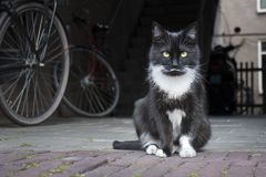 Black and white cat sitting on the street. And looking into camera stock image