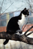 Black and white cat sitting on a tree. Beautiful black and white cat sitting on the tree in early spring stock photo
