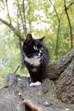 Black and white cat is sitting on tree while walking in urban park. royalty free stock photos