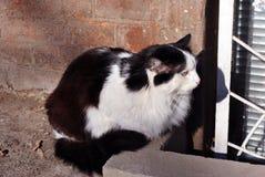 Black and white cat sitting on windowsill of basement floor window with jalousie, brick wall background. Black and white cat sitting on windowsill of basement royalty free stock photo