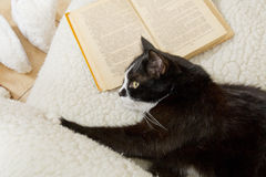 Black and white cat sleeping in a chair on the old book Stock Photo