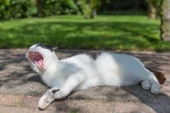 Black and white cat sleeping in a garden Stock Photography