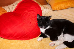 Black and white cat is sleeping on red pillow in shape of heart. Stock Image